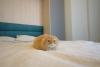 Двуспальная Шкаф-Кровать JUPITER 180 - фото 9